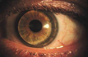 линзы цветные для зеленых глаз.